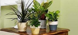 گیاهان آپارتمانی را چگونه آبیاری کنیم؟