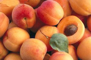 زرد آلو میوه خوشمزه با خواص ضد سرطان